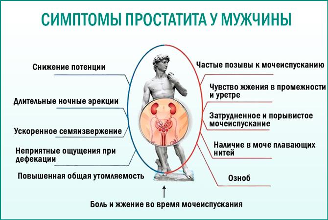 Лечение простатита членом схема лечения витафоном простатита